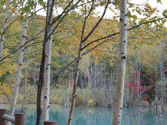 秋の北海道へ:まずは美瑛&青い池を目指して