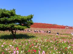 国営公園散策日記①-2 コキアとコスモスが織りなす赤の大地