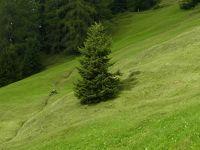 2014年スイス旅行(12)~歩こう!!~Davoser 9-Alpen-Tour(キノコの香りを添えて)