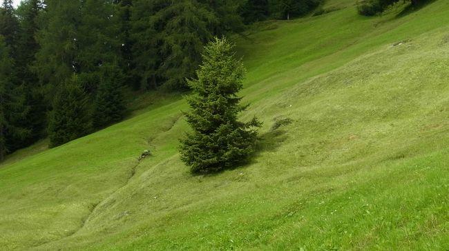 Davosには、Davoser 9-Alpen-Tourと名付けられたトレッキングコースがあります。Davos Dorf、もしくは、Mittelstation Höhenwegから南西(Filisur方面)に向かって、約8時間歩くコースです。<br />今回のDavos旅行のメインイベントですが、資料で8時間とあるコース、温泉スイス夫婦の足では9時間以上かかりそう。ですので、完全クリアするのであれば、2日かける必要があります。今回は初めてのDavosでしたし、天気も良くなかったため、2日もかける余裕がなく、最後まで行くことができませんでした。残りは次回ぜひ。<br /><br />コースは、Davos Dorf(Mittelstation Höhenweg)→Büschalp→Schatzalp(ここまでは前日歩いていたので省きました)→Podestatenalp→Lochalp→Grüeni Alp→Erbalp→Stafelalp(天気が危なくなってきたのでここで断念)→Chummeralp→Bärentaler Alp→Glaris、と続きます。Mittelstation Höhenwegからは、反対方向にPanoramawegがありますから、Gotschnagratからずっと歩き続けることもできます。<br /><br />ところで、この旅行記、ある意味、キノコ図鑑と言えるかも…。