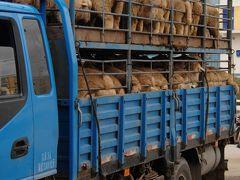 2013年中国新疆放浪記037・甘粛省張掖へ…の筈が。。。