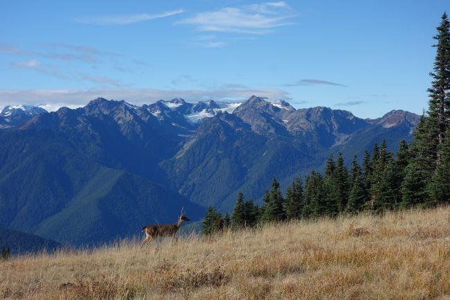 久々に北米を旅したくなり、いろいろと考えた末シアトルに決定。<br />前回、グランドキャニオンに行ったときのアメリカの国立公園の魅力が忘れられず今回また国立公園を巡る旅に。<br />日本には無い、壮大な自然、景色を満喫した旅でした。<br /><br />全日程<br />-Day 1- <br />NH1078にてNRT〜SEA Bussiness Class<br />レンタカーをピックし軽くシアトル市内をドライブ<br />ホテル(Holiday Inn Express Sea-Tac Airport)へチェックイン<br /><br />-Day 2-<br />マウントレーニエ国立公園へ。サンライズビジターセンターまで行く。軽いトレッキング。<br />その後国立公園内を1周ドライブをしながらシアトルダウンタウンまで行き軽い市内探索。<br />ホテルに帰る途中Safewayにてデリ、シアトルのビールRED HOOKを仕入れてホテルで食事後就寝<br /><br />-Day 3-(←今ここ!)<br />早朝ホテルを出発し、ワシントンフェリーにてベインブリッジ島へ。<br />オリンピック国立公園へ向かう。ハリケーンリッジビジターセンター到着。軽いトレッキング。<br />その後、La Pushへ。海岸線に打ち上げられた無数の流木。最果ての地を感じる。<br />最後はHoh Rain Forest ビジターセンターへ。<br />世界遺産にも登録されている、一面苔に覆われた神秘的な森を体感。<br />ハーフトレイルにチャレンジしてオリンピック半島1周ドライブ後ホテルへ。<br /><br />-Day 4-<br />Boeing工場見学(Future of Flight)へ。世界最大の工場(ギネス認定)を見学。<br />最新のB747-800やB777-9Xの製造過程を見学。<br />展望デッキにてDreamLifterの離陸に立ち会うことができた。<br />シアトルダウンタウン散策へ。パイクプレイスマーケット。スタバ1号店。スペースニードルを見学<br />夜中のダウンタウン市内の写真撮影に火が付き2時間ほどカメラ片手に街歩き。<br />奇麗なシアトル市内の夜景を楽しみながらハイウェイを飛ばす。<br />ホテル着<br /><br />-Day 5-<br />帰路へ。<br />レンタカーをチェックインしシアトル・タコマ空港へ。<br />NH1077 SEA~NRT Bussiness Class