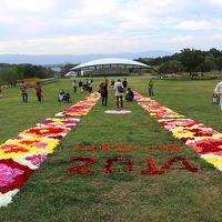 奈良 馬見丘陵公園 ダリアの花絨毯