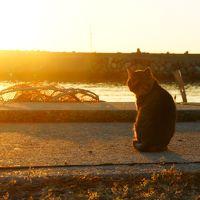 2014秋晴れの瀬戸内ふらり旅vol.2(祝島ねこさんぽ&錦帯橋)