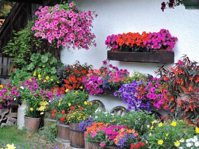 オーストリアのチロル州、Wilder Kaiser地方に滞在5日目です。<br />この日は雨だったので山には行かず、松味利郎先生の美術書<br />「チロール壁絵の里」で知ったセル村に行くことにしました。<br />実はこのセル村、昨年2013年に「ヨーロッパで一番美しい花の村」に<br />選ばれたばかりで、村にはお花を飾った可愛い家が沢山ありました。<br /><br />雨でしたが、美しい壁絵やお花の家、教会の内部をじっくり見て<br />素晴らしい時を過ごすことができました。