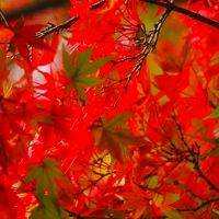 そうだ!紅葉を見に行こう!!! 靖国神社 2013年秋