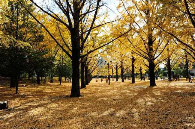 熊本市 -  熊本城 - 江津湖 - 県庁の銀杏並木