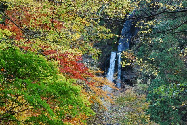 抱返り渓谷は昭和30年代まで森林軌道が走っていたところです。<br /><br />現在は軌道跡が遊歩道となっています。遊歩道から対岸の山を眺めると色鮮やかな紅葉が楽しめます。<br /><br />折り返し地点近くにある滝見の東屋からは、美しい彩りの紅葉に溶け込む「回顧の滝」が眺められます。<br />