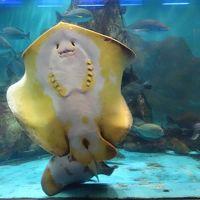 和太鼓を堪能し、能登島水族館から能登観光へ