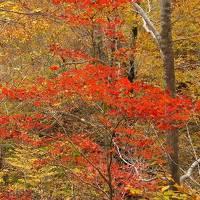 秋の北陸探訪(1)魚津・氷見・新湊 白山林道の紅葉