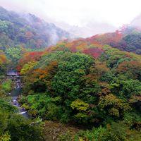 霧の中に見え隠れする、ほのかな紅葉@箱根