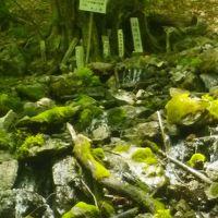2012球磨川の源流ってこの辺ですか?