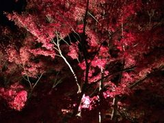 白河 南湖公園のライトアップを堪能しちゃいました。