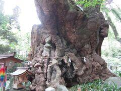 熱海の来宮神社はパワースポット!大楠は圧巻!