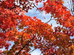 東京にも、紅葉の便りがぼつぼつと・・・昭和記念公園へ紅葉を見に(^ー^*) えっ(゚ロ゚ 食欲の秋実感! 紅葉(花)よりお芋さん(だんご)でした(~ー~。)ポッ