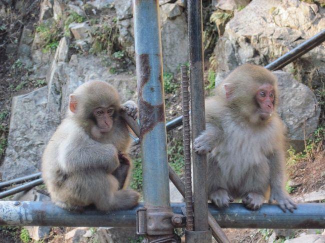 昨年、特急しなので隣に座ったフィンランド人観光客から「温泉に入るサルを見られる」と聞き<br />日本にそのような所があることを初めて知りました。<br />動物好きとしては行かなくては!と思い立ち、<br />一番近いお宿はどこ?と探して見つけたのが上林温泉。<br />一人用プランがあった仙壽閣さんに泊りました。<br />途中、善光寺さんと小布施にも立ち寄りました。<br />松本に用事があったため、松本からの小旅行です。