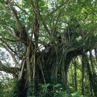 バニラエアで行くふらり奄美大島一人旅(3)加計呂麻島ミラクルムーン