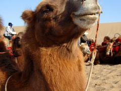 2013年中国新疆放浪記052・敦煌散策…その06・月牙泉でお月見~鳴沙駱駝隊【後編】