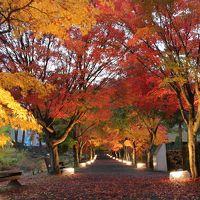 雨の紅葉回廊「心静かに紅葉を観る会」 富士吉田
