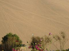 2013年中国新疆放浪記053・敦煌散策…その07・月牙泉でお月見~駱駝隊月牙泉へ!【前編】
