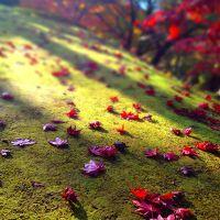 尾関山公園へ紅葉ドライブ!