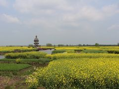 中国・揚州(興化・千島菜の花へ)