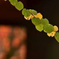 2014紅葉(1) 花フェスタ記念公園で晩秋紅葉を探して