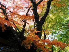 カメラをポケットに背割堤と石清水八幡宮で紅葉を探して見ました