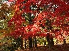 旅するイルカ♪ 紅葉狩り 兵庫県 原不動滝、最上山公園へ