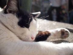 ☆猫巡礼の旅④ ー谷中の猫寺探し いつも失敗編☆