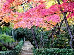 紅葉を求めて嵯峨野めぐり ~化野念仏寺から嵐山まで(後編)