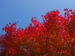 イルミネーションと紅葉を満喫「るり渓温泉」