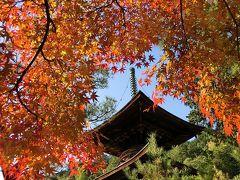 京都('14 紅葉狩り)