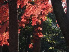 代々木公園の秋景色と東京駅・丸の内 Autumn color of Yoyogi Park/Tokyo Marunouchi
