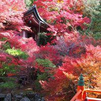 京都・山科   毘沙門堂  燃えるような赤紅葉!