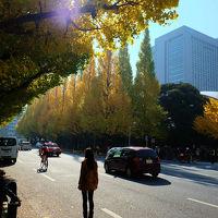 神宮外苑銀杏並木 黄葉 と 消え行く日本青年館有難う。