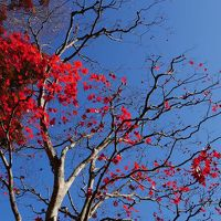 2014年:家族で!紅葉の御岳山登山?
