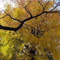 ☆秋を感じに新宿御苑へ☆おまけで神宮外苑