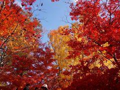 播州紅葉めぐり その1 最上山公園もみじ山