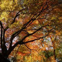 紅葉のちょい山歩き関西三日間(三日目・完)~壷阪寺から高取城跡のハイキングは、これ以上ない紅葉の絶景。橿原周辺のサイクリングでクールダウンしました~