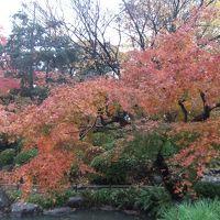 今が紅葉の見ごろ旧古河庭園