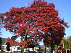 京都の嵯峨嵐山の寺院と紅葉