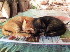 ミャンマーで出会った動物たち