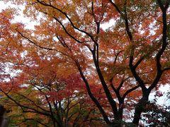 2014・秋・養老公園の紅葉
