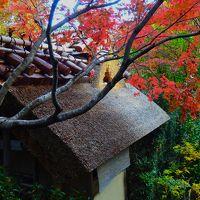2014年11月後半の3連休 京都の紅葉巡り