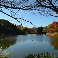 横浜の紅葉 2014 三ッ池公園、三溪園、馬場花木園