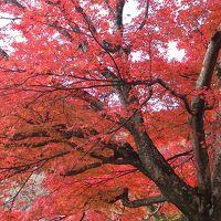 京都 西山の錦秋めでつつ筍料理も