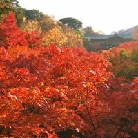 京都の紅葉めぐり 2014(3) 1日目