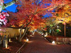 嵐山・宝厳院のライトアップに魅せられて・・・