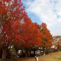 芸術の秋 瀬戸と名古屋の美術館巡り そして紅葉も♪